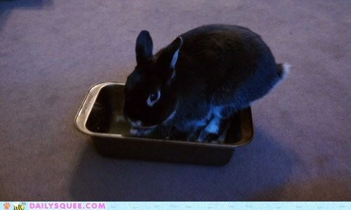 cake pan,happy bunday,pet,rabbit,reader squee