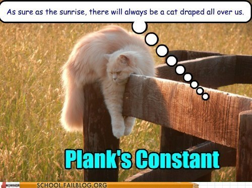 fence science Cats max planck funny - 6373225472