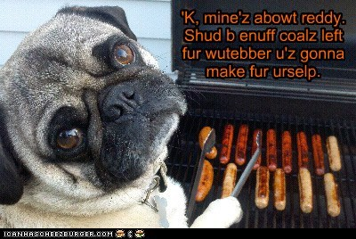 Cheezburger Image 6373482240