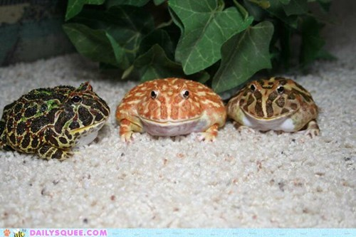 frog,pet,reader squee,toad