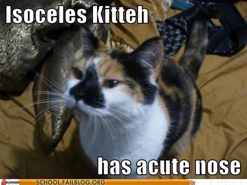 acute nose Cats isoceles kitteh - 6374023680