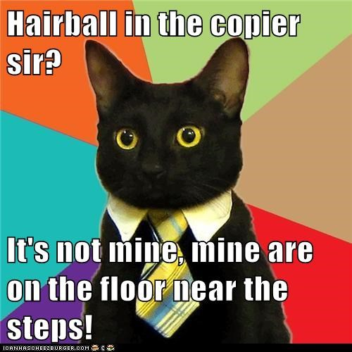 Business Cat Cats copy machine hairballs Memes offices work