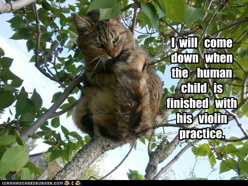 I will come down when the human child is finished with his violin practice.