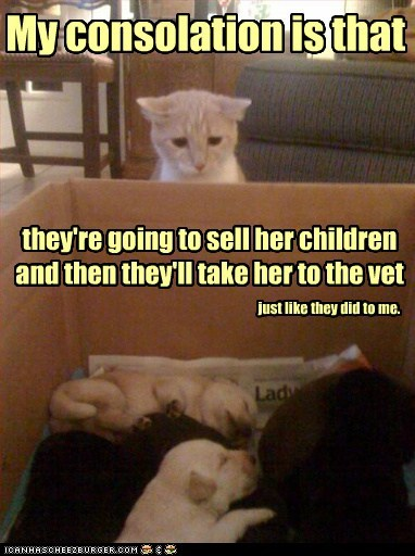 just like they did to me. My consolation is that they're going to sell her children and then they'll take her to the vet