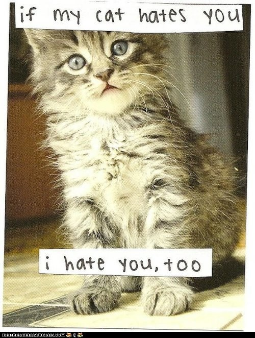 best of the week Cats hate i hate you - 6375337216