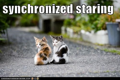 creepy game lolcat sport Staring synchronized twins