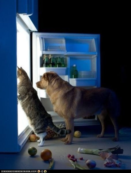 Cats,dogs,food,fridges,goggies r owr friends,Interspecies Love,naughty,refrigerators