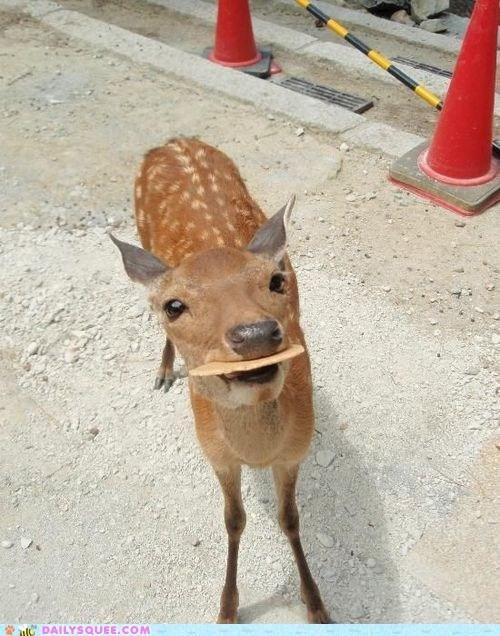 cookies deer generous gift noms snack - 6375528448
