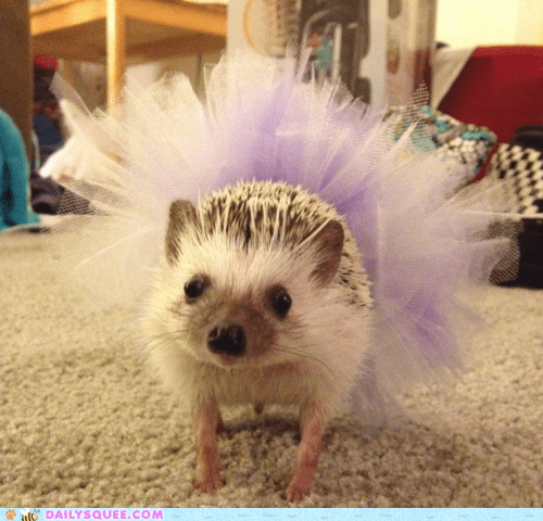ballerina dreams hedgehog prickly squee tutu - 6375545344