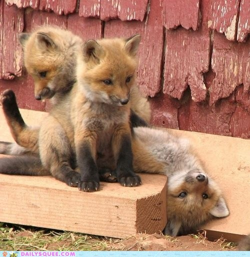baby cub fox foxy modeling squee - 6375546880