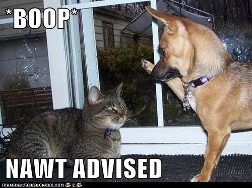 *BOOP* NAWT ADVISED