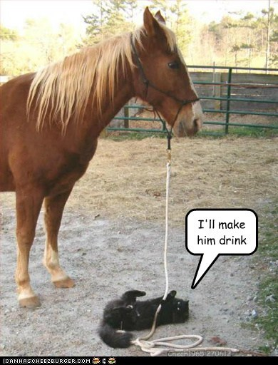 cat drink expression horse idiom water - 6375678464