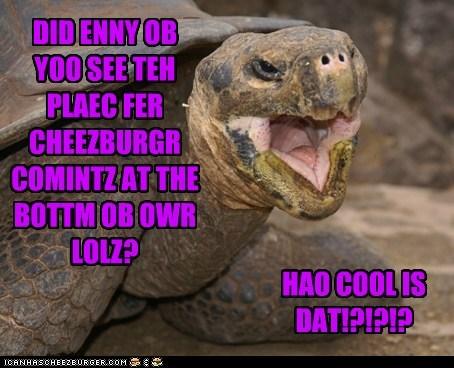 Cheezburger Image 6375743488