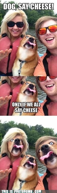 animal Animal Bomb best of week cheese dogs Reframe say cheese