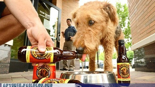 beer for dogs,bowser beer,crunk critters,dogs
