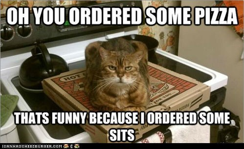 annoying captions Cats if i fits i sits in the way lolcats pizza sits - 6376111104