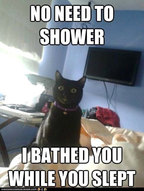 bathing,baths,Cats,creepy,gross,licking,overly attached cat,sleeping,Staring,watching,while you were sleeping