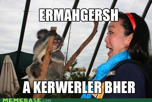 animals derp Ermahgerd koala bears - 6376530944