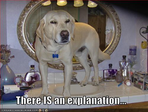 bathroom labrador mirror sink - 637672704