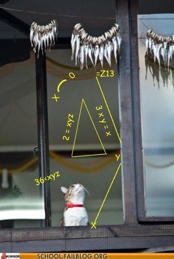 calculations Cats math math cat - 6376866816