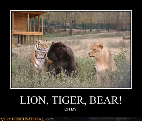 bear,hilarious,lion,oh my,tiger