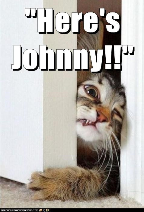 cat derp heres-johnny the shining - 6377959424