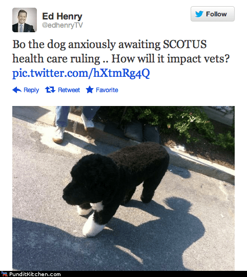 bo dogs health care obamacare political pictures White house