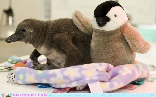 baby,bad day,cuddle buddy,penguin,stuffed animal