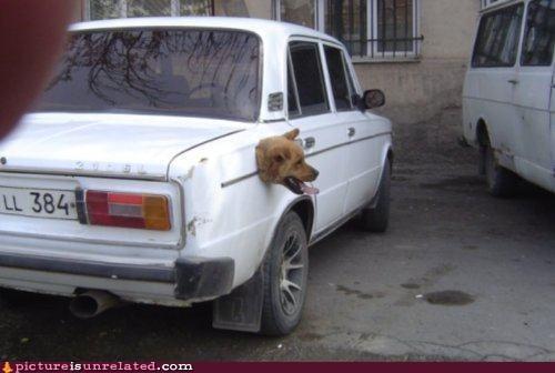 car dogs wtf - 6378907904