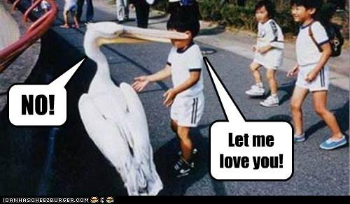 bird birds bite captions hug kid kids love no pelican - 6378979840