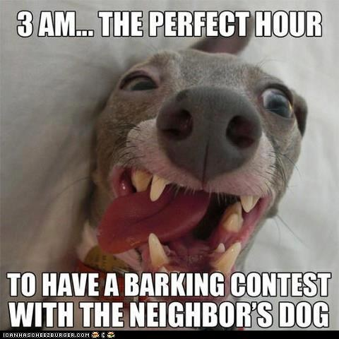 3 am annoying barking dogs neighbors tired too early wake up - 6378997760