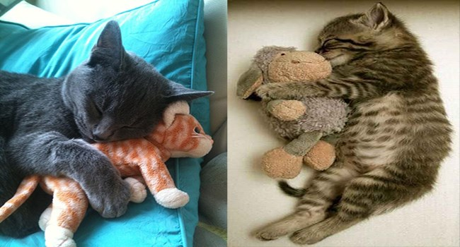 cute kittens sleeping with toys