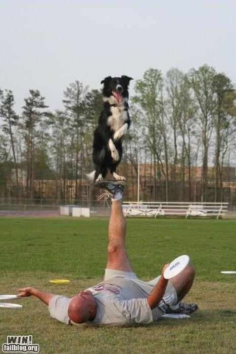 balance dogs pets Stupid Pet Tricks - 6379550464