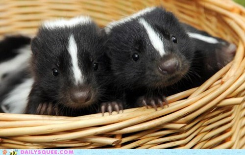 baby,basket,basket squee,baskets,skunk,skunks,squee spree