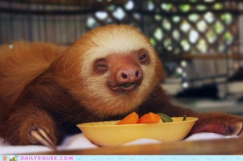 Cute and creepy sloth eating some yummy vegetables.