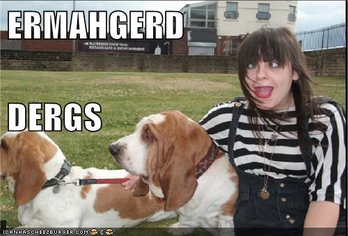 derp dogs Ermahgerd goggie going for a walk - 6380068352