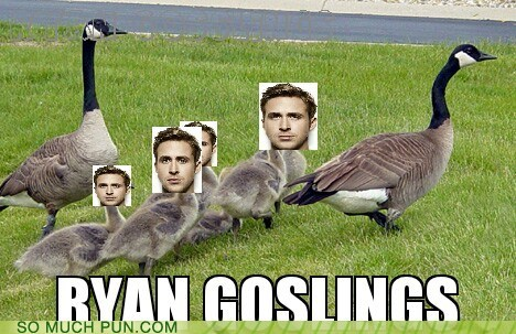 double meaning,gosling,literalism,Ryan Gosling,surname