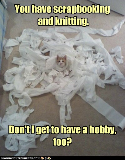 captions,Cats,destroy,hobby,knitting,scrapbook,toilet paper