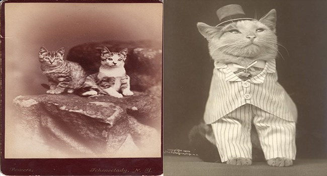 black and white vintage photographs of cats