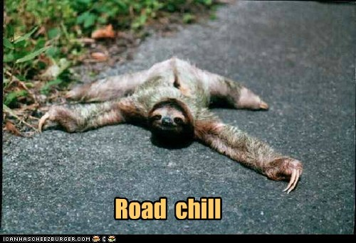bro,chill,lying down,puns,road,sloth