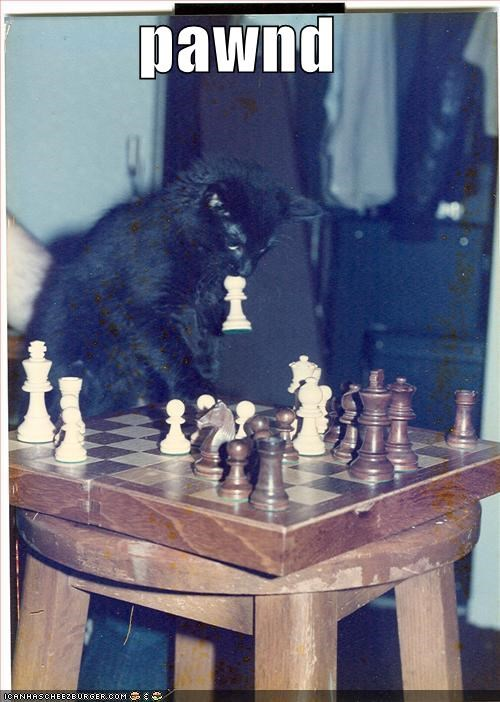 black chess games lolcats pawn - 638099200