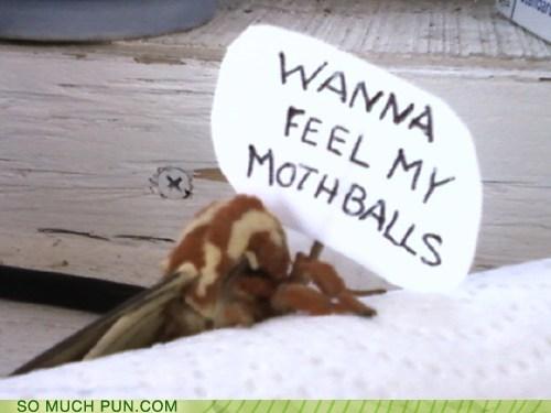 balls creepy innuendo insect lolwut moth mothballs - 6381340928