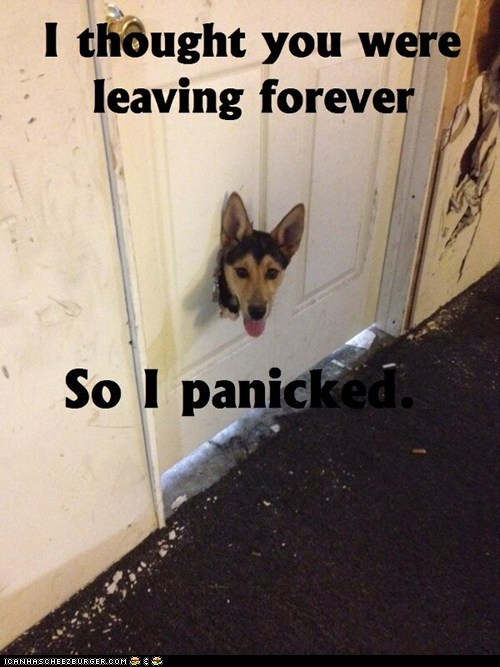 captions destruction disaster dogs doors holes messes panic panicking