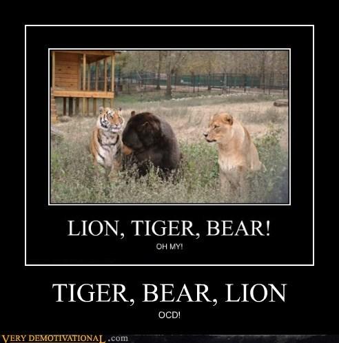 bear hilarious lion ocd proper order tiger - 6382178304