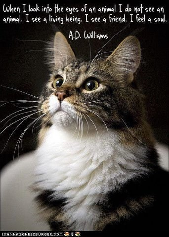 a-d-williams,animals,best of the week,Cats,eyes,inspiring,pets,quotes,souls,sweet