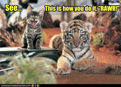 cat class meow rawr teaching tiger cub - 6382480896