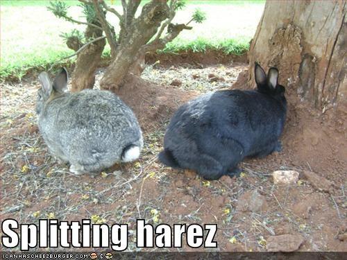 bunnies hares lolbunnehs lolbuns rabbits - 638262528