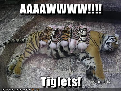 baby animals,best of the week,costume,cuddling,Hall of Fame,mother,piglets,sleeping,tiger
