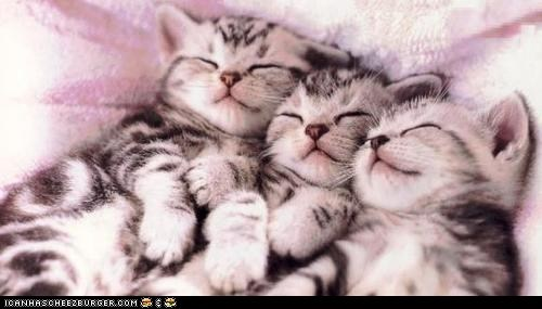 Cats,cyoot kitteh of teh day,in a row,kitten,napping,naps,sleeping