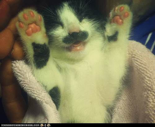 Cats cyoot kitteh of teh day kitten paws paws up sprize surprise tiny